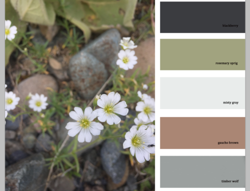 Finding Color Inspiration in Nature